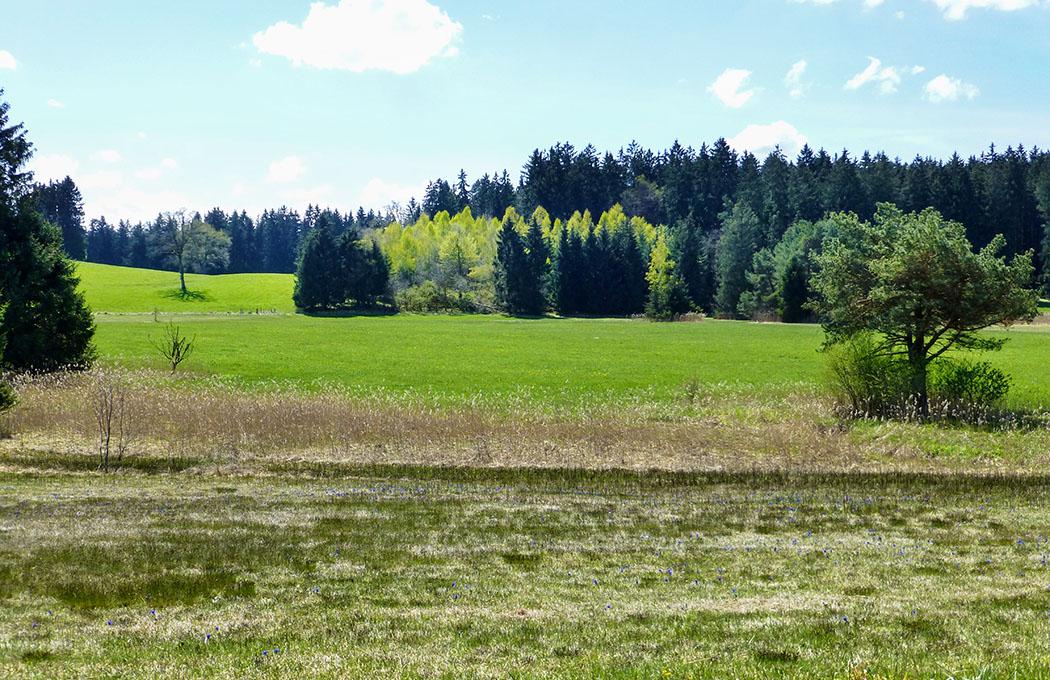 Die Enzian-Wiese im Süden des Mesnerbichl ist nicht sofort erkennbar.