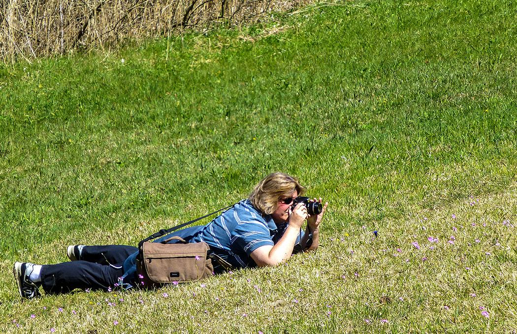 Mesnerbichl: Makrofotografin in Frühlingswiese: Die Pfade sollten nicht verlassen werden, die Schönheiten sind auch perfekt von den Wegen aus zu bewundern.