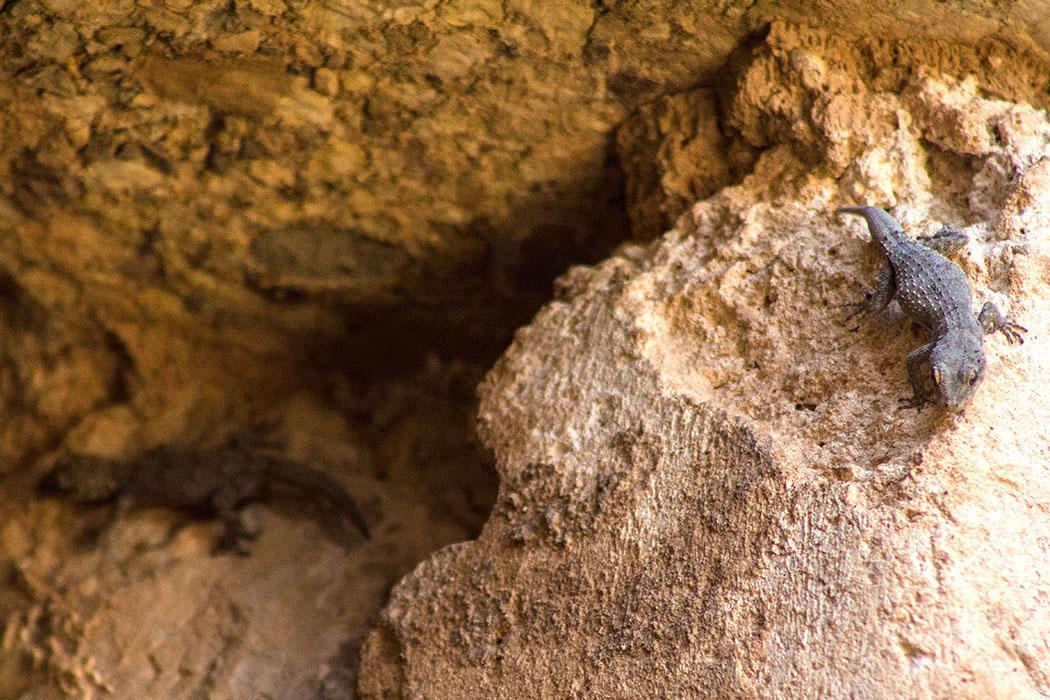 Grab der Genien: Zwei Geckos sitzen am Zugang und beobachten uns.