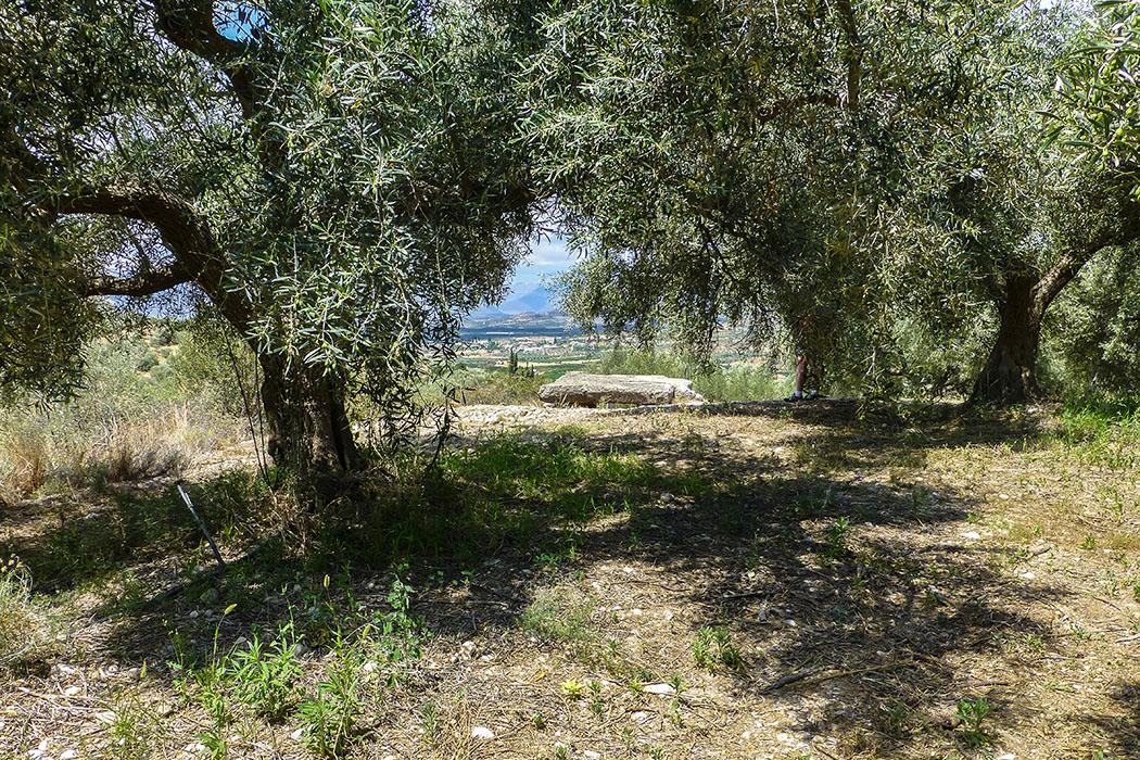 Das Kato Phournos-Grab liegt 40 Meter westlich hangabwärts der geteerten Straße entfernt, mitten in einem Olivenhain und ist von der Straße aus nicht direkt zu sehen. Das Foto zeigt die großen Decksteine vom Zugang in das Grabrund.