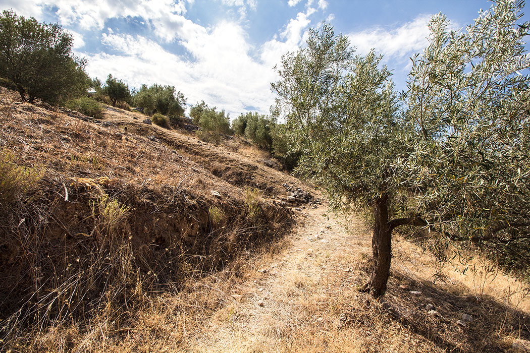 Panagia-Grab: Wir sind angekommen. Der Einschnitt in den Hügel lässt schon deutlich den tiefen Einschnitt des Dromos zum Grabeingang erkennen.
