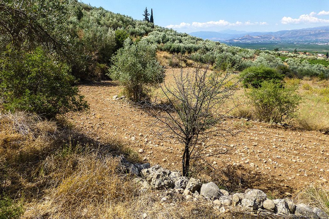 Oliventerrassen und kleine Felder säumen den kurzen Weg zum Panagia-Grab.