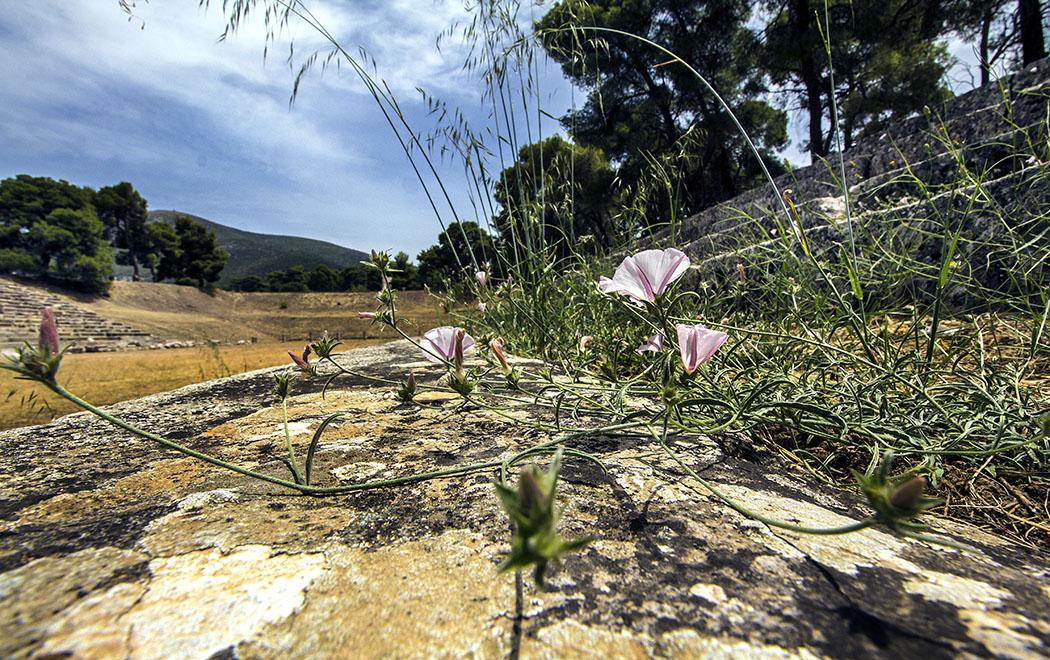 epidauros stadium sanctuary asklepios argolis peloponnese greece Im antiken Stadion von Epidauros blühen in den Spalten der Sitzreihen bis in den Frühsommer die Blumen.