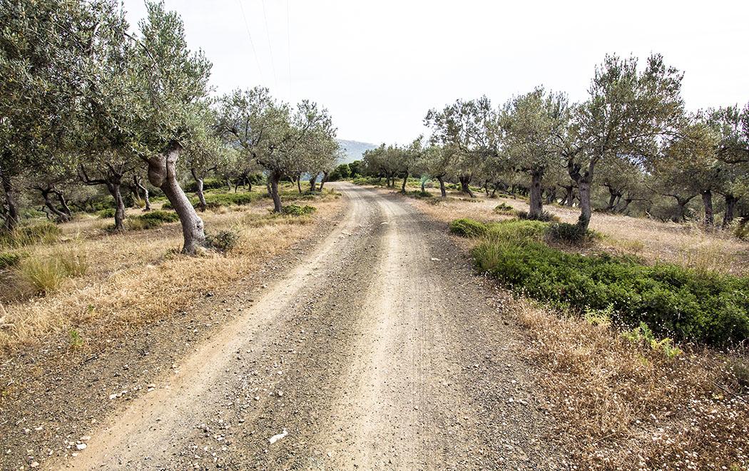 Uralte Olivenhaine und Feldterrassen mit Trockenmauern säumen den Weg zum Maleatas-Heiligtum.