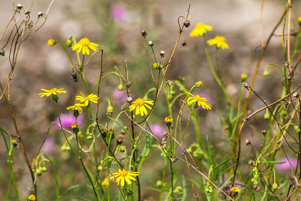 Faszinierend bunte Blütenpracht in gelb und rosa.