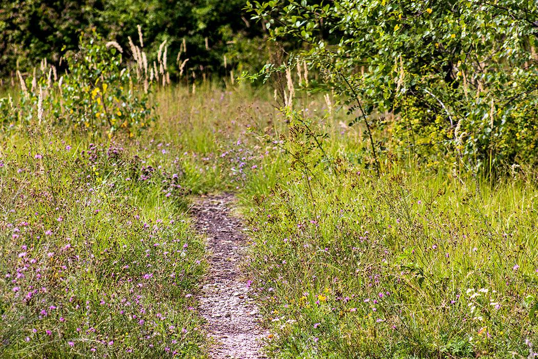 Romantische Pfade führen im Neuaubinger Gleislager an Blumenteppichen, Gräsern und Büschen vorbei.