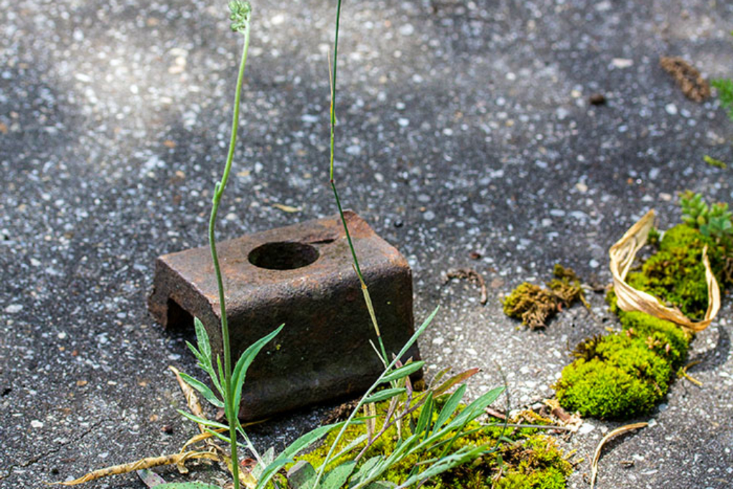 Die Teerwege im Biotop von Neuaubing sind für die Kraft der Natur auf Dauern kein Hindernis. Hier bilden Moose und Gräser kleine Kunstwerke, die teilweise durch herumliegende Eisenteile verziert werden.