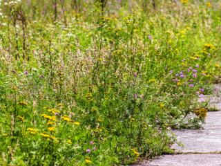 Die Natur erobert sich das Areal am Aubinger Gleislager zurück.