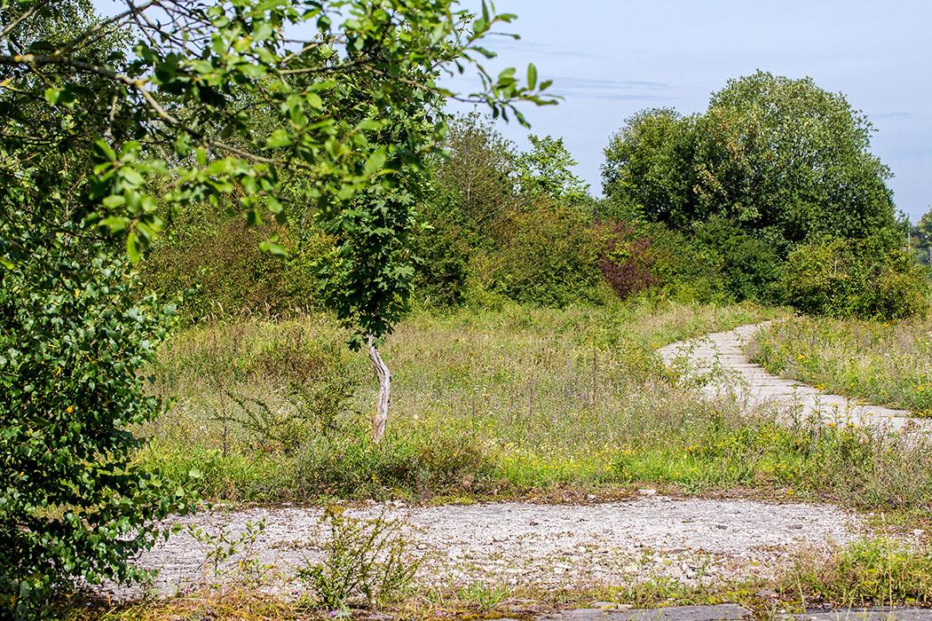 Unterwegs im Biotop des Neuaubinger Gleislagers: Betonwege, Teerflächen und Pfade führen durch die Artenreichen Naturflächen.