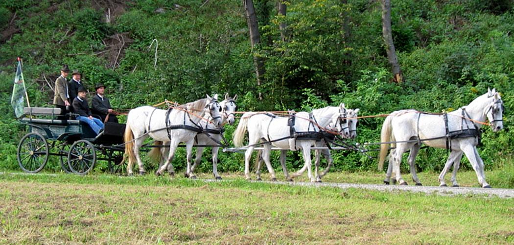 sechspaenner pferdekultur.at