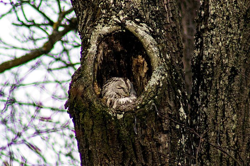 Ob die Schlafhöhle in der alten Linde auch warm gepolstert ist?