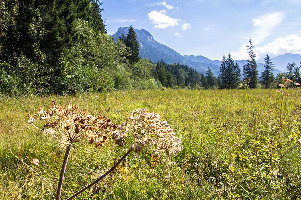 Ammergauer Alpen Ettaler Weidmoos bayern deutschland ettal Talwanderung im September 2016 durch das Ettaler Weidmoos in den Ammergauer Alpen.