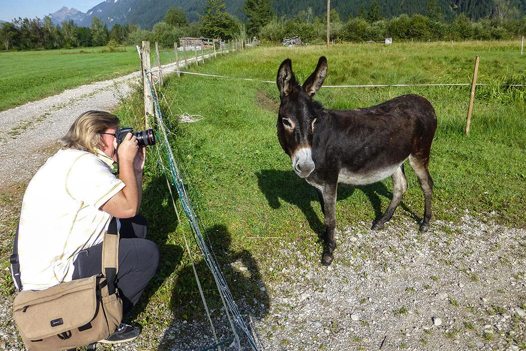 """""""Endlich mal ein echter Fototermin!"""" Ob der Esel schon vermutet, dass er bald im Internet bewundert werden kann!"""
