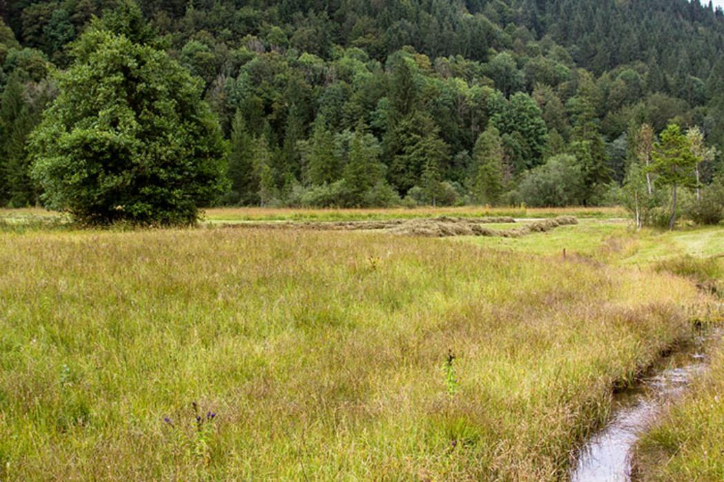 Die Quellbäche im Ettaler Weidmoos bieten vielen seltenen Pflanzen und Tieren idealen Lebensraum. Im Hintergrund Falkenwand am Rappenkopf.