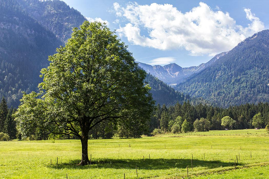 Grüne Wiesen, blauer Himmel und ein wunderbares Bergpanorama.