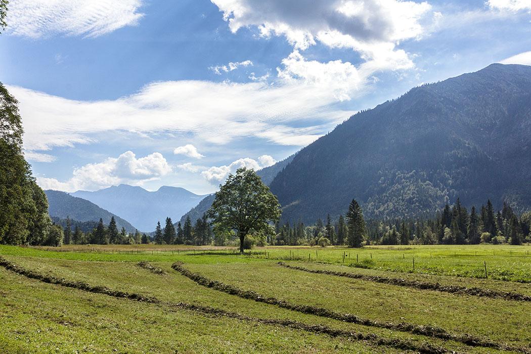 Auch bei den Rahmbauernhöfen wurde das Heu sauber aufgerecht. Der Blick schweift zurück zum Weidmoos und in Richtung Ettal.
