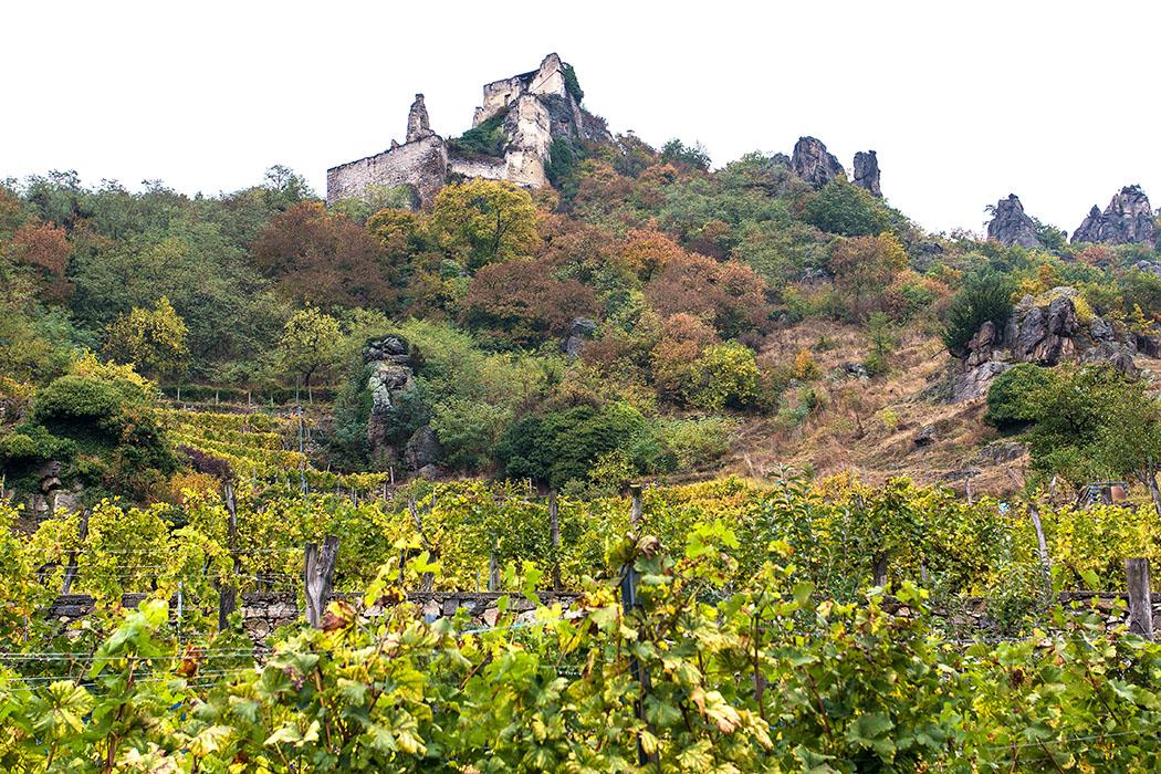 Der beschilderte Themenweg hinauf zur Burg Dürnstein führt zunächst durch den Ort und an Weinterrassen vorbei.
