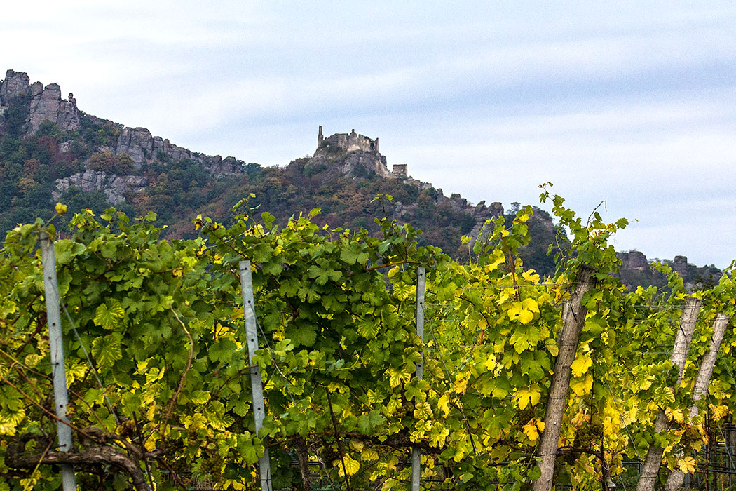 Romantische Abendstimmung in den Weingärten, dazu ein sagenhafter Blick auf die Burgruine von Dürnstein.