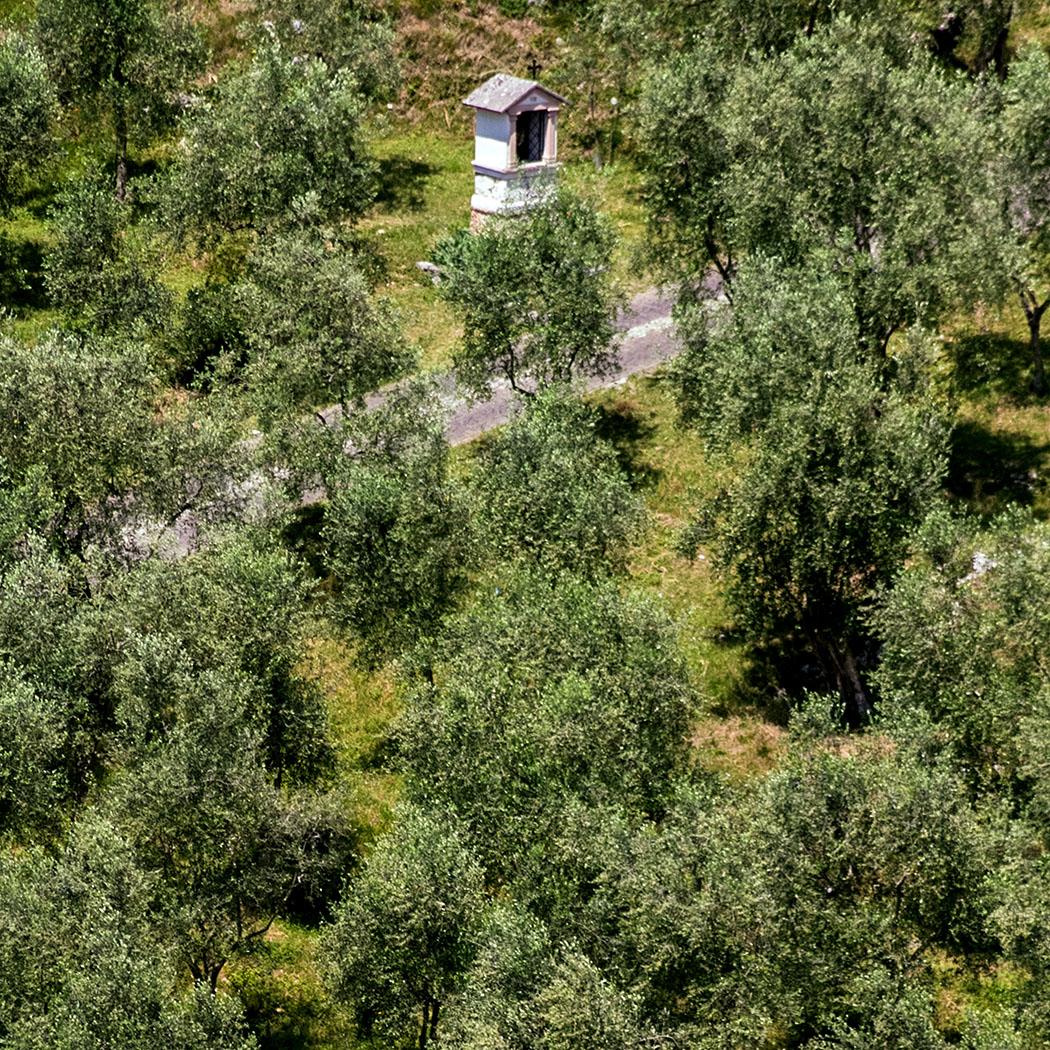 Garda Trentino: 10 Ausflugstipps im Norden vom Gardasee garda trentino arco laghel wegkreuz wandern oliven terrassen riva del garda gardasee italien Das wärmespeichernde Wasser vom Gardasee lässt im Sarcatal bei Arco eine mediterrane Flora wachsen.