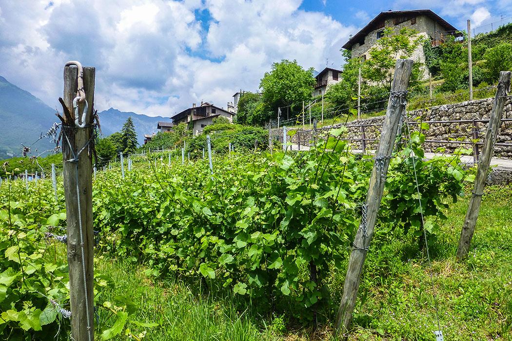 Eine schmale Straße führt durch Weingärten zum Dosso di San Lorenzo und seiner Kirche.