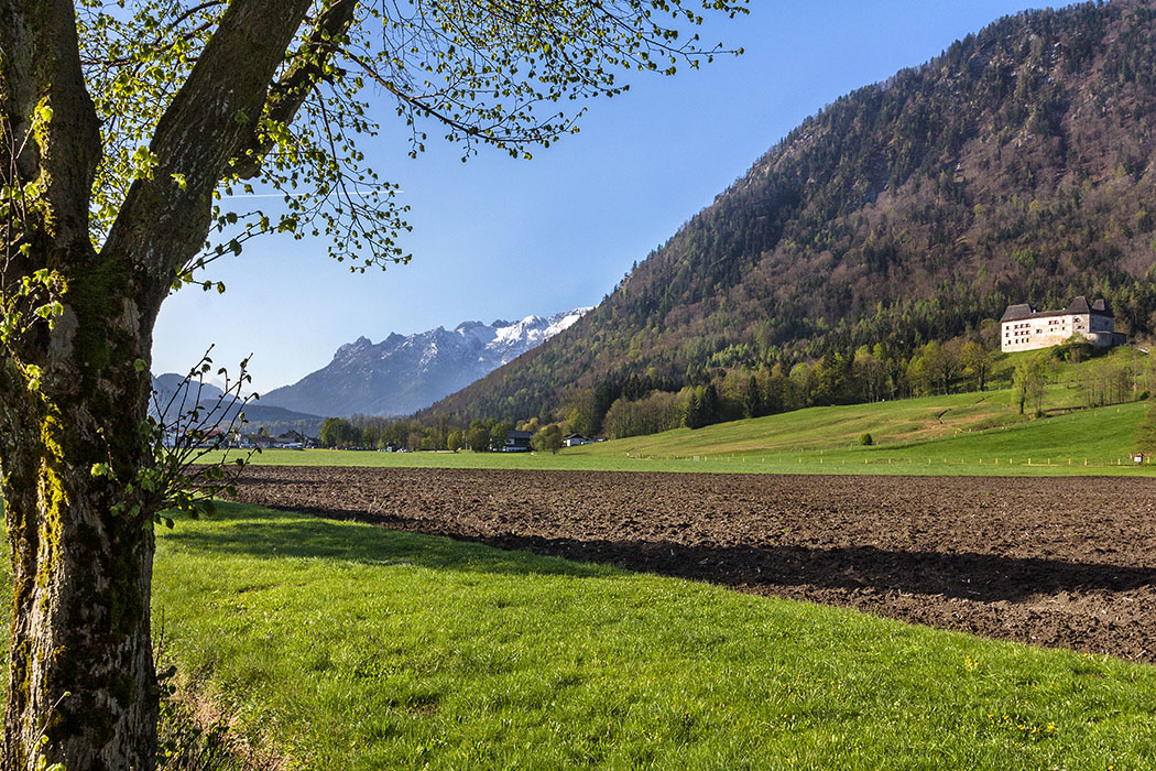 """Oberbayern: 10 Ausflüge im Berchtesgadener Land und Salzburg - Deutschland, Oberbayern, Berchtesgadener Land, Rupertiwinkl, Piding, Urwies, Schloss Staufeneck Frühling im Rupertiwinkel im Berchtesgadener Land. Ein Tag mit Bilderbuchwetter und weiß-blauem Himmel über Bayern. Rechts ist das Schloss Staufeneck bei Piding zu sehen, eine mittelalterliche Festung am Fuße des Hochstaufen. Im Hintergrund das schneebedeckte Lattengebirge mit dem Rotofen, auch """"Schlafende Hexe"""" genannt."""