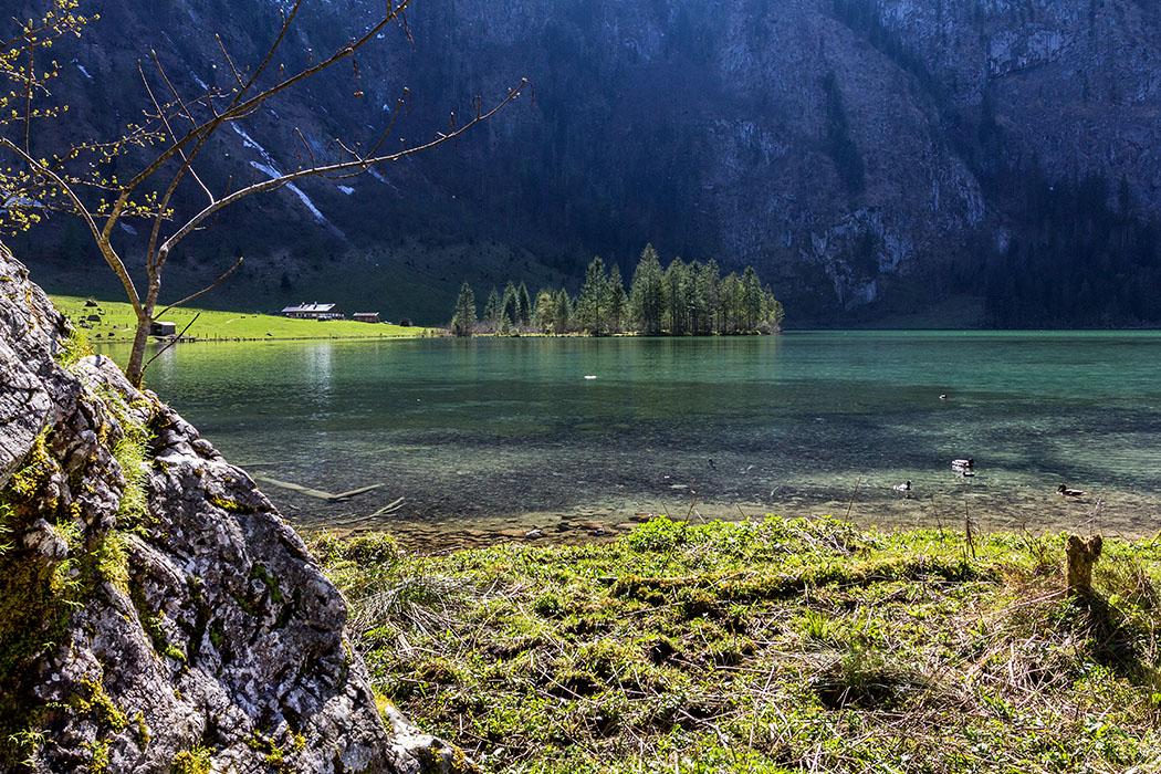 """Oberbayern: Königssee - Von Salet zur Fischunkelalm am Obersee - Deutschland, Oberbayern, Nationalpark Berchtesgaden, Koenigssee, Saletalm, Enten, Salet, Alm, April 2017 - Die """"echte"""" Salet-Alm liegt direkt am Königssee. Der Weg dorthin zweigt, von der Alpengaststätte """"Saletalm"""" kommend, nach der Brücke, rechts ab. Der Weg führt am See entlang bis zur Almhütte."""