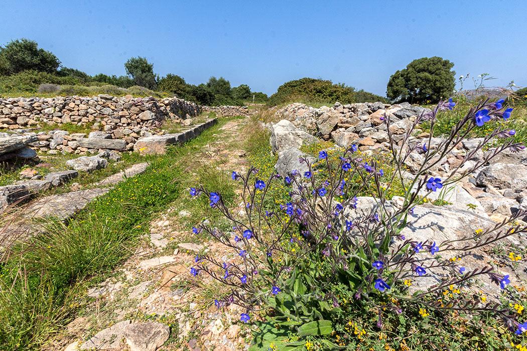 Straßen durchziehen die Ruinen der minoischen Stadt. Farbenprächtige Frühlingsblumen beleben die Szenerie.