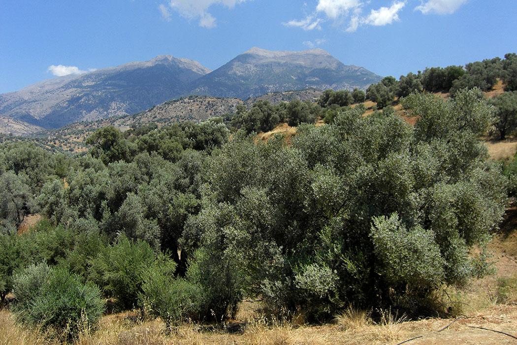 greece_crete_ida_phaistos_agiatriada