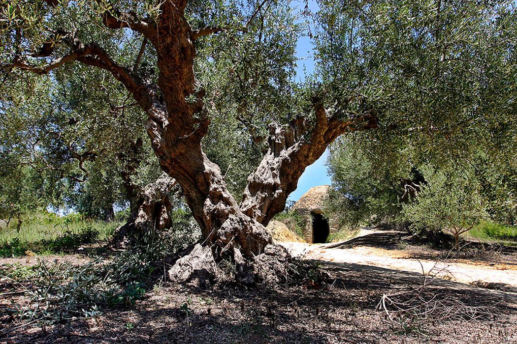 Griechenland: Pylos - Zwei Fürstengräber bei Nestorpalast entdeckt tholos-epano-englianos-nestor-palace-pylos-messenia-peloponnese-1