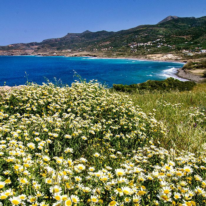 Ostkreta: Unsere 25 Sehenswürdigkeiten um Sitia und Ierapetra - reise-zikaden.de, greece, crete, lasithi, sitia, agia fotia, trypitoa, spring, flowers