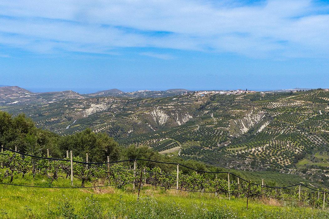 Unterwegs auf der Insel Kreta: Archanes - Ausflug zum Jouchtas mit seiner wilden Natur. Zentrales Thema ist die faszinierende Pflanzenwelt Kretas, diese ist im Frühling spektakulär. - reise-zikaden.de, Griechenland, Kreta, Heraklion, Archanes - Blick auf die fruchtbare Weinbauregion um den Hauptort Archanes in Zentralkreta. Hier werden Kotsifali- und Mandilaria-Reben angebaut und gekeltert. Diese ergeben einen trocken ausgebauten Rotwein mit der höchsten griechischen Appellation O.P.A.P. Foto: Pauline Lindner