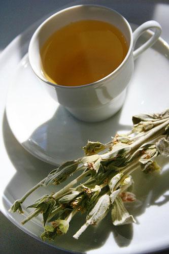 Greek mountain tea - Griechischer Bergtee enthält als Hauptbestandteil Sideris syriaca. Auf Kreta wird die Pflanze Malotíra genannt. Foto: Wikipedia, Kimchifan