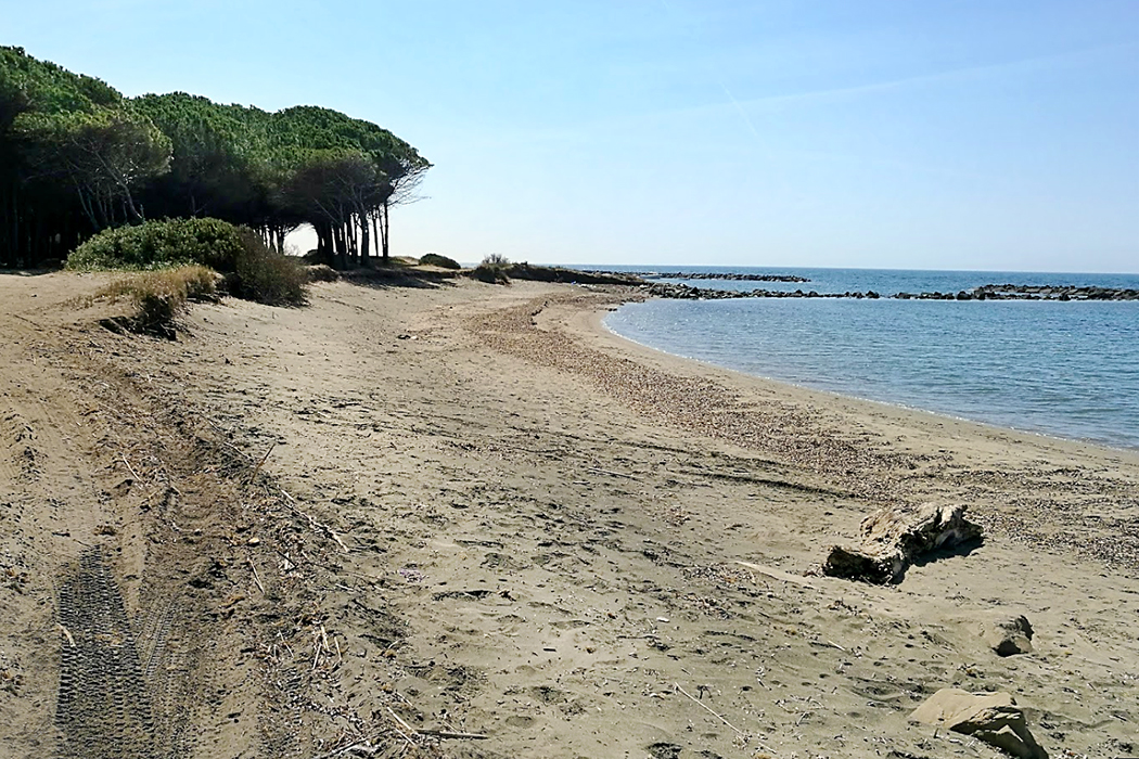 Latium: Die 5 schönsten Strände bei Tarquinia - Tarquinia, San Giorgio beach - Die naturbelassenen Strände bei San Giorgio liegen an schattigen Pinienwäldern.