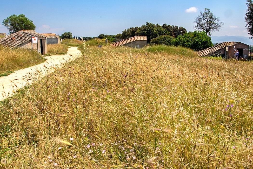 Latium: Tarquinia - Etrusker-Hauptstadt mit freskierten Gräbern - reise-zikaden.de, Italien, Latium, Tarquinia, Monterozzi Nekropole, Etrusker, Gräber - Auf den ersten Blick ist die Monterozzi-Nekropole unspektakulär. Hohes Gras mit vielen bunten Blumen trügt darüber hinweg, dass wir uns auf einem etruskischen Friedhof befinden. Die modernen, länglichen Betonbauten schützen die steil nach unten führenden Treppen zu den farbenprächtigen Felsengräbern.