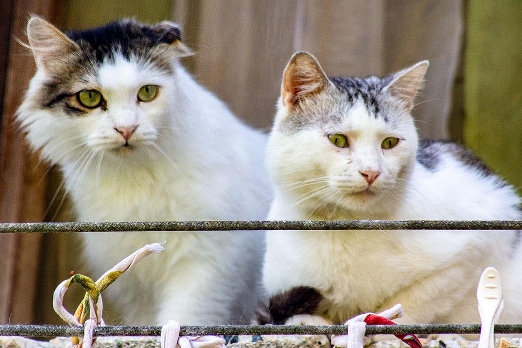 Die beiden Katzen beobachten das Geschehen in den Gassen der Altstadt.