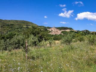 Panoramablick auf Castelnuevo di Val di Cecina mit Blumenwiese (Cichorium intybus), ´jungen Olivenbäumen und Kastanienwald.