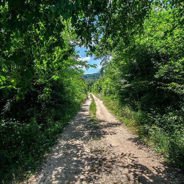 reise-zikaden.de, italy, tuscany, castelnuovo di val di cecina, valle di pavone, forest - Schattige Wanderwege durchziehen die Colline di Metallifere. Der Weg im Valle di Pavone führt zur mittelalterlichen Bogenbrücke Ponte del Delfizio.