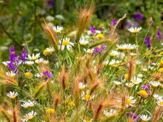 Eine bunte Wildblumen-Mischung blüht direkt neben dem Wanderweg durchs Pavone-Tal.