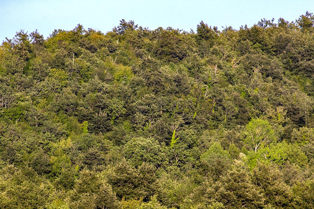 reise-zikaden.de, italy, tuskany, colline metallifere, forest, oaks Colline Metallifere: Unendliche Eichenwälder mit einer intakten Natur.