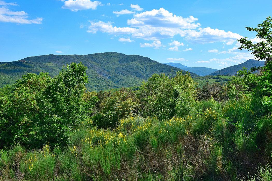 valle di pavone - Die Wälder in den Colline Metallifere sind überwiegend mit Eichen, Kastanien und Macchia bewachsen und hinterlassen den Eindruck durch einen Urwald zu Wandern. Foto: Flickr, Filippo Gasperini