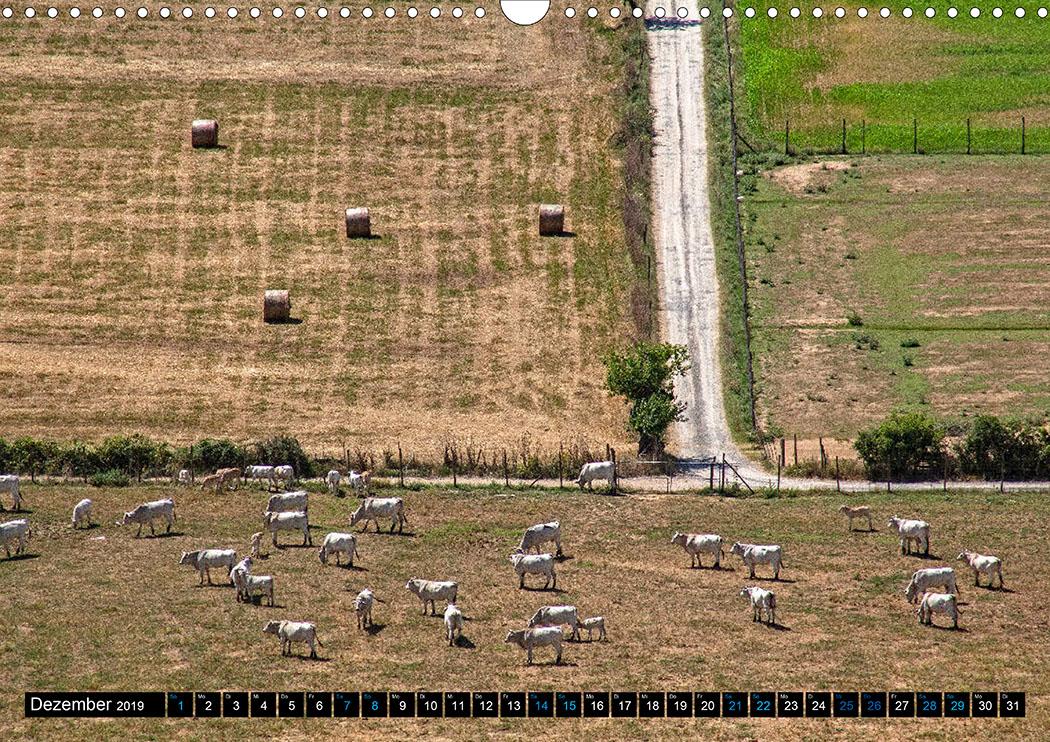 Dezember: Roselle: Chianina ist die älteste Rinderrasse Italiens, es wird seit etruskischer Zeit gezüchtet.