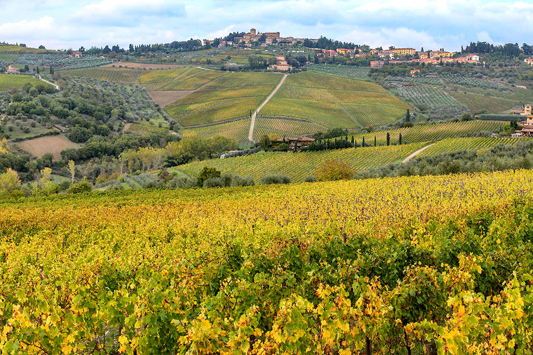 reise-zikaden.de, italy, chianti, tuscany, panzano, wineyard Inbegriff der toskanischen Landschaft ist das Chianti zwischen Florenz und Siena. Besonders schön ist die Region im farbenprächtigen Herbst, wie auf unserem Foto von Panzano in Chianti.