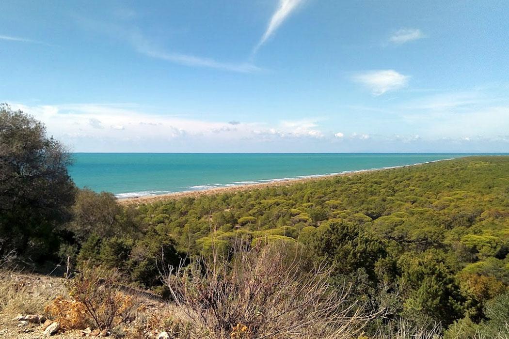 Parco Regionale della Maremma, alberese, grosseto Wunderschöne Naturerlebnisse erwarten Wanderer im Parco Regionale della Maremma. Das Foto zeigt die Aussicht Richtung Nordwesten auf den Strand Spiaggia di Marina di Alberese.