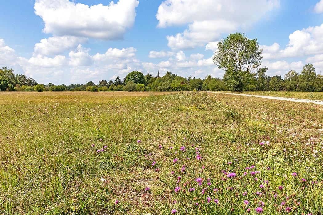 Mallertshofer Heide: Steppen-Erlebnis im Norden von München