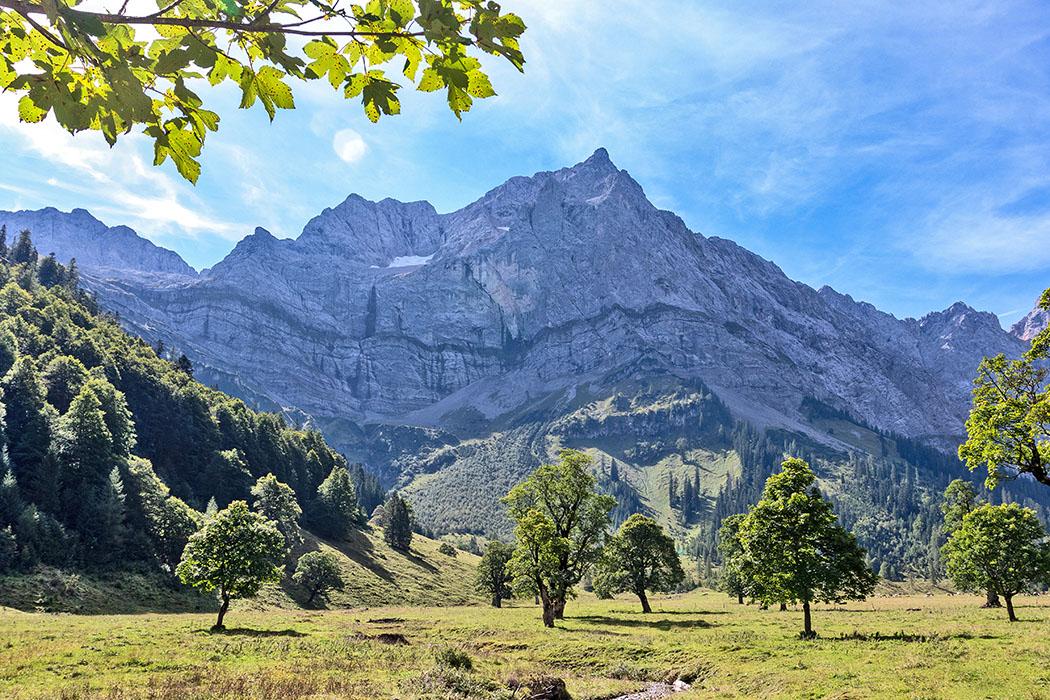 Tirol: Karwendel – Ausflug zum Ahornboden und der Eng Alm reise-zikaden.de, österreich, tirol, hinterriss, rissbach, oberes risstal, eng alm, almdorf, bergahorn Blick über den Großen Ahornboden bei der Eng Alm in Tirol auf die Spritzkarspitze (2.606 Meter). Rund zweitausend Berg-Ahornbäume (Acer pseudoplatanus) bilden im Hochtal einen lichten Bergwald. Foto: Reise-Zikaden, M. Hoffmann