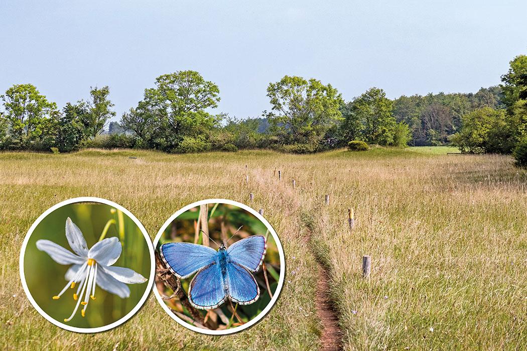 Im Norden von München: Hügelgräber aus der Bronzezeit in der Garchinger Heide