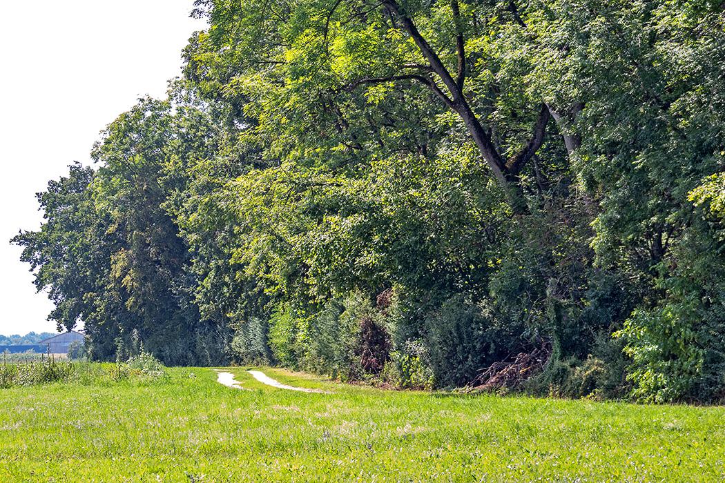 reise-zikaden.de, deutschland, oberbayern, eching, garchinger heide, naturschutzgebiet, echinger lohe Die Echinger Lohe ist seit 1951 ein Naturschutzgebiet. Früher wurde aus der Rinde junger Eichen Gerberlohe gewonnen, die Leder haltbar machte. Foto: Reise-Zikaden, M. Hoffmann