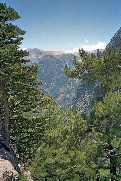 Samaria Gorge, Crete, Greece, Pinus brutia Die Kretische Kiefer (Pinus brutia) wächst bis heute in der Samaria-Schlucht in Westkreta. Seit Mittelminoischer Zeit wurden auf Kreta zum Bootsbau regionale Waldvorkommen genutzt. Foto: Wikipedia, Robert Linsdell