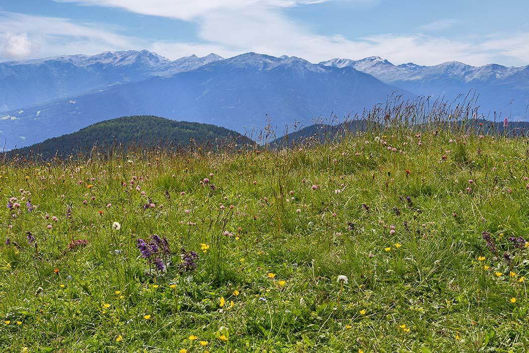 reise-zikaden.de, Südtirol, Dolomitental Villnöss – Unsere 8 schönsten Bergtouren, herrensteig, kofelwiese
