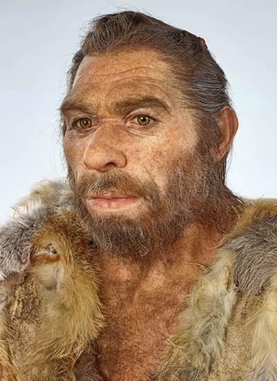 Neandertaler Rekonstruktion Die Künstlerin Elisabeth Daynès aus Paris rekonstruierte den Original-Neandertaler. Die Figur ist im Rheinischen Landesmuseum Bonn ausgestellt. Foto: J. Vogel, LVR-LandesMuseum Bonn